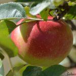 Le cinque stagioni del cibo